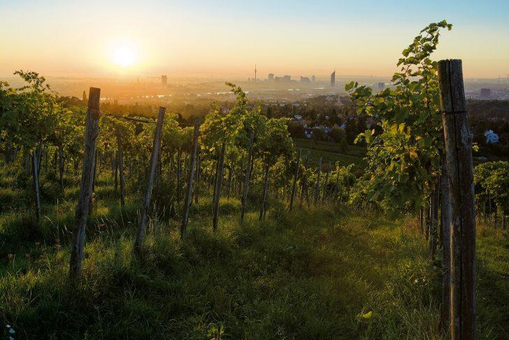 W Weingarten © WienTourismus Lois Lammerhuber