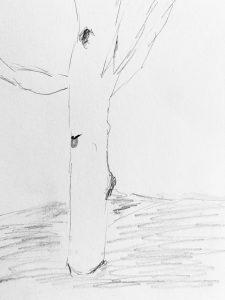 Baum Rebekka